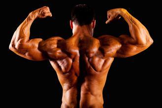 几组增加背部肌肉的锻炼动作