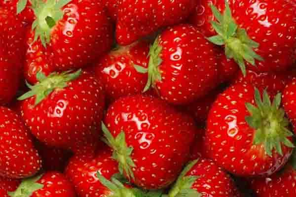 常见的草莓