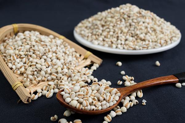 薏米,主食里的蛋白质高手