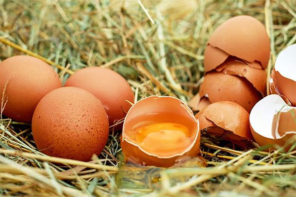优质蛋白十佳食物排行榜